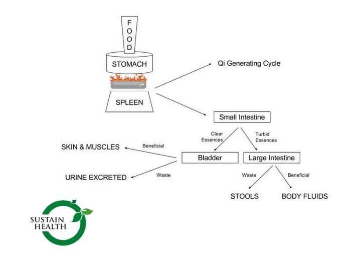 Qi generating cycle